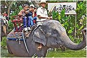 a famosa elephant show