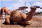 a famosa animal safari