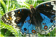 the-butterfly-park